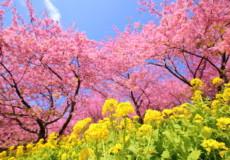 季節の変わり目は体調に気を付けましょう。 春編①